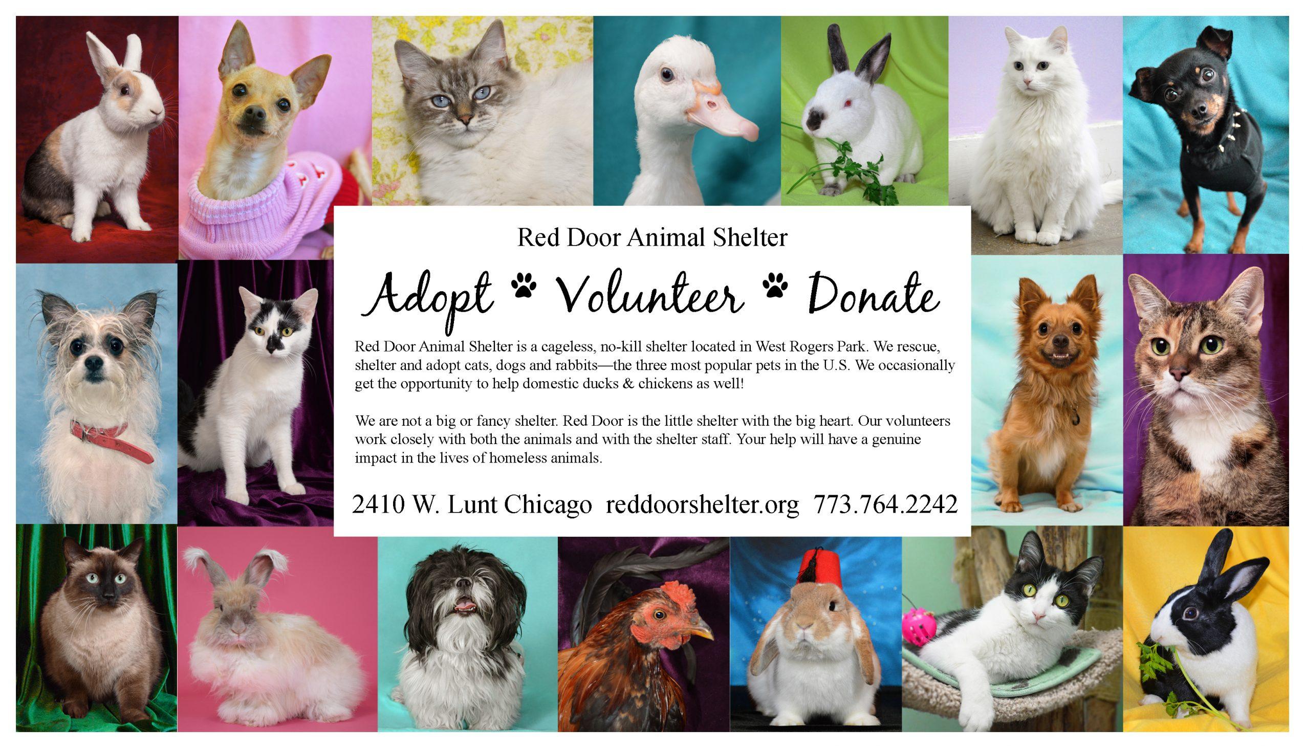 Meet Toni Greetis Of Red Door Animal Shelter Voyage Chicago